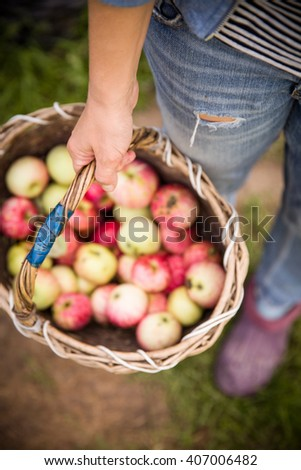 Closeup of vintage basket with organic apples in woman's hands. Garden harvest. Summer. outdoors. Woman holding a big basket of fruit. Healthy lifestyle and eating. - stock photo