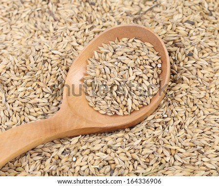 Closeup of wheat grains with wood spoon. Whole background. - stock photo