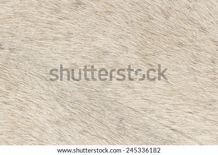 Closeup of white fur pattern - stock photo