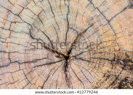 Closeup of wood texture, Thailand - stock photo