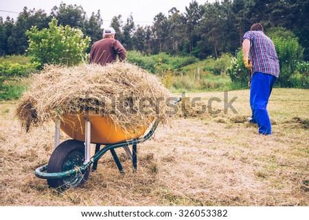 Closeup of yellow wheelbarrow full of dry hay and men raking on the field - stock photo