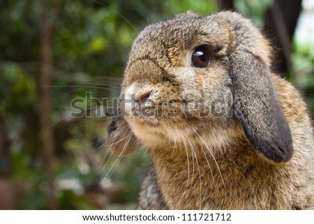 Closeup of young rabbit head at outdoor