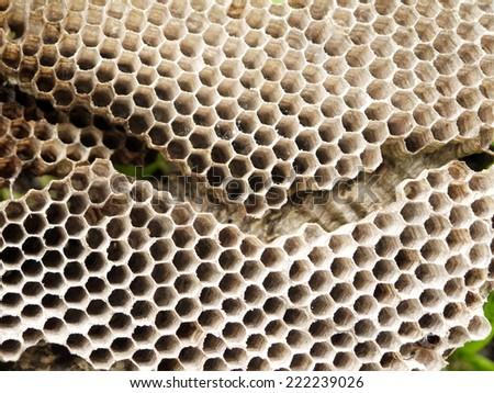 closeup old wasp honeycomb - stock photo
