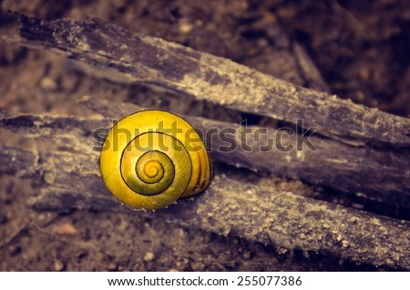 Closeup on a little yellow snail shell on brown dirt - stock photo