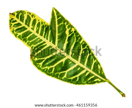 Closeup pattern of colorful leaf with isolated white background