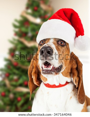 Closeup photo of a Basset Hound dog wearing a Santa Claus hat in front of a decorated Christmas tree.
