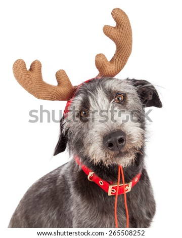 Closeup photo of a cute dog wearing Christmas reindeer antlers - stock photo