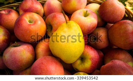Closeup photo of ripe yellow pear lying on red apples in basket - stock photo