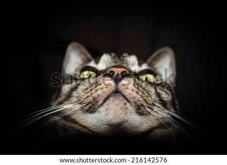 Closeup photo of tabby cat face isolated on black background - stock photo