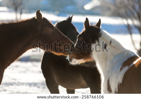 Closeup photo two beautiful horses pasturing on field covered by snow - stock photo