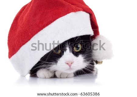 closeup picture of a cute black and white cat wearing a christmas hat