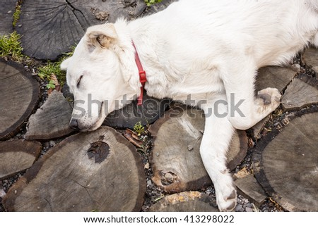 closeup picture showing a dog as it sleeps on a rustic floor - stock photo