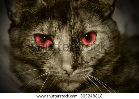 Closeup portrait of a red eyed evil cat - stock photo