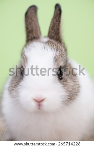 Closeup portrait of a small bunny against green background - stock photo