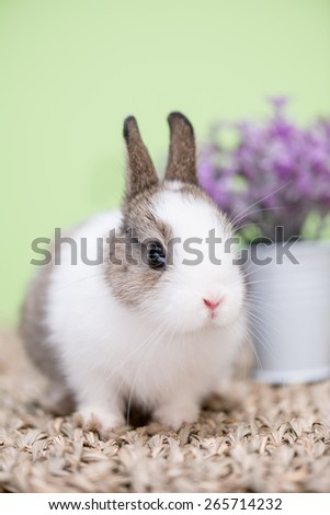 Closeup portrait of a small bunny against green background and purple flowers - stock photo