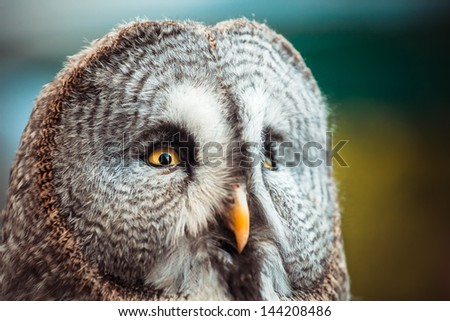 Closeup portrait of a tawny owl (Strix aluco) in the woods. - stock photo