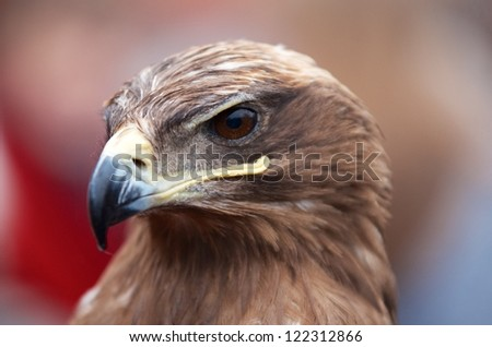 Closeup portrait of the head of an eagle in profile showing the strong curved beak - stock photo