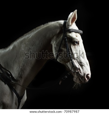 Closeup portrait white horse in the dark - stock photo