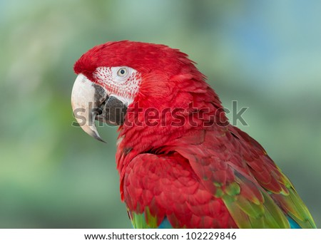 Closeup profile of colorful red, blue and green winged macaw