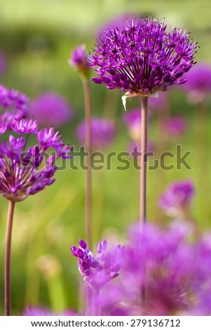 closeup purple flowers, natural abstract  soft floral background - stock photo