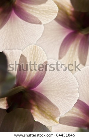 Closeup purple orchid flower abstract background - stock photo