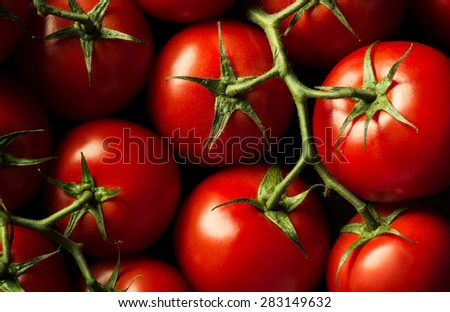 Closeup ripe juicy tomatoes on the vine - stock photo