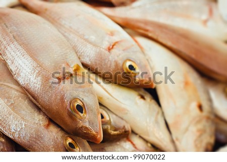 closeup shoot of a group of mediterranean snappers in a market - stock photo