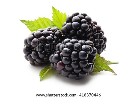 Closeup shot of fresh blackberries. Isolated on white background. - stock photo