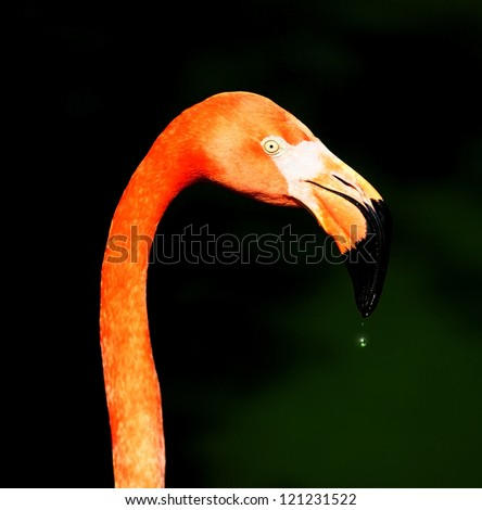 closeup shot of pink flamingo on green background - stock photo