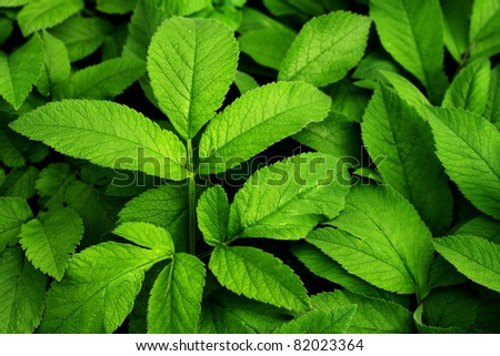 Closeup shot on green leaves - stock photo