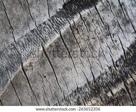 closeup textured surface of coconut tree bark - stock photo
