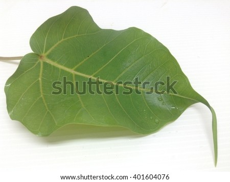 Closeup the single beautiful shape leaf isolated on a white background