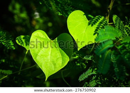 Closeup two leaves like a heart shape in the forest - stock photo