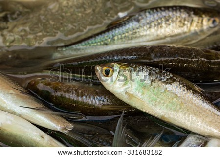 closeup variety of fresh fish in market