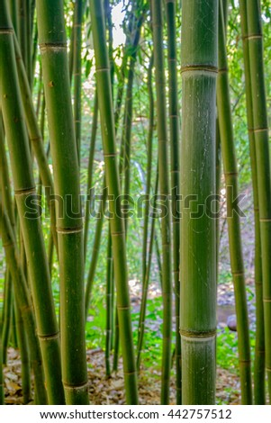 Closeup vertical image of a grove of bamboo trees - stock photo