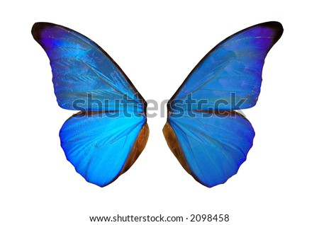 Closeup view of blue butterfly wings  isolated on a white background - stock photo