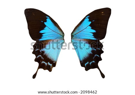 Closeup view of blue butterflywings isolated on a white background - stock photo