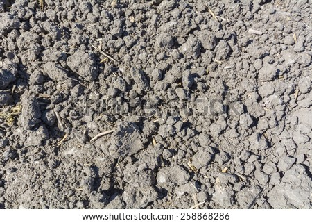 Closeup view of land planted in sunny day - stock photo