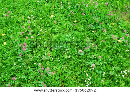 Closeup view of springtime green meadow with blooming flowers