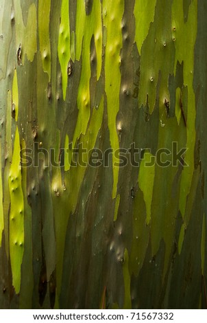 Closeup view of the bark of a eucalyptus tree showing the different green shades and bark detail - stock photo