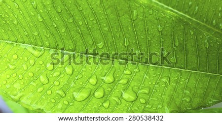 Closeup water drop on green leaf background banner style