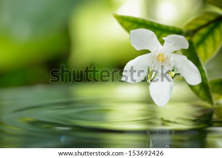 closeup white flower floating on water with droplet in garden. - stock photo