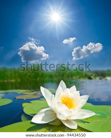 closeup white lily under a sparkle sun - stock photo