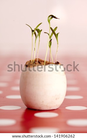 Closeup with selective focus of pepper seedlings in a nursery - stock photo