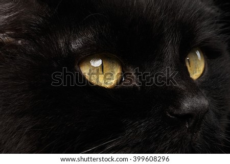 Closeup Yellow Eyes of Black Cat Snout on Black Background - stock photo