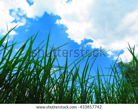 Closeup young paddy and clouds sky - stock photo