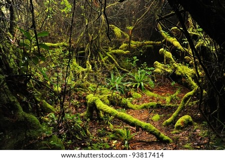 Cloud Forest, Poàs Volcano National Park, Costa Rica - stock photo