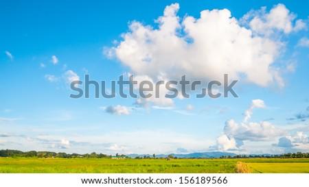 Cloud on rice field - stock photo