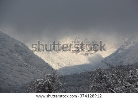 Cloud shrouded mountainside forest blanketed with snow
