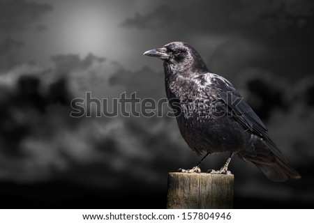 Clouds and crow that can be used for halloween - stock photo